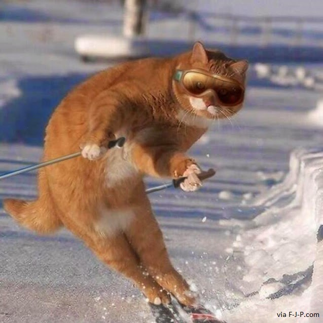 Funny Skiing Cat Joke Picture