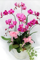 toko bunga anggrek jakarta selatan