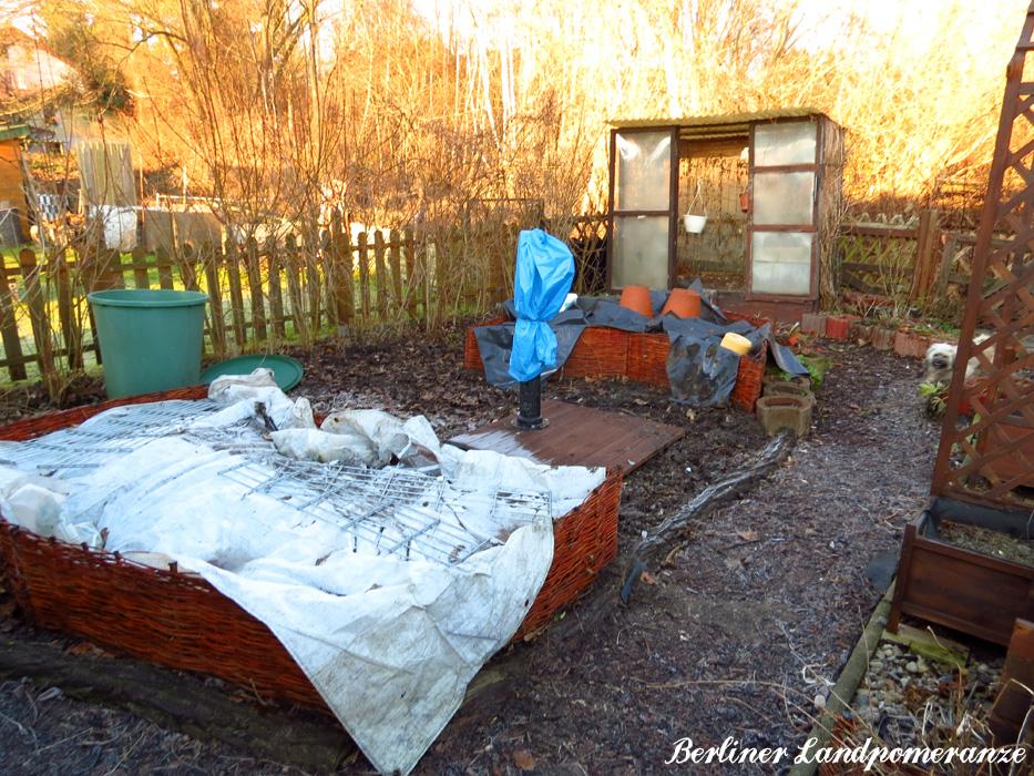 Berliner Landpomeranze Ein Berlin Gartenblog Winterschutz Fur Den