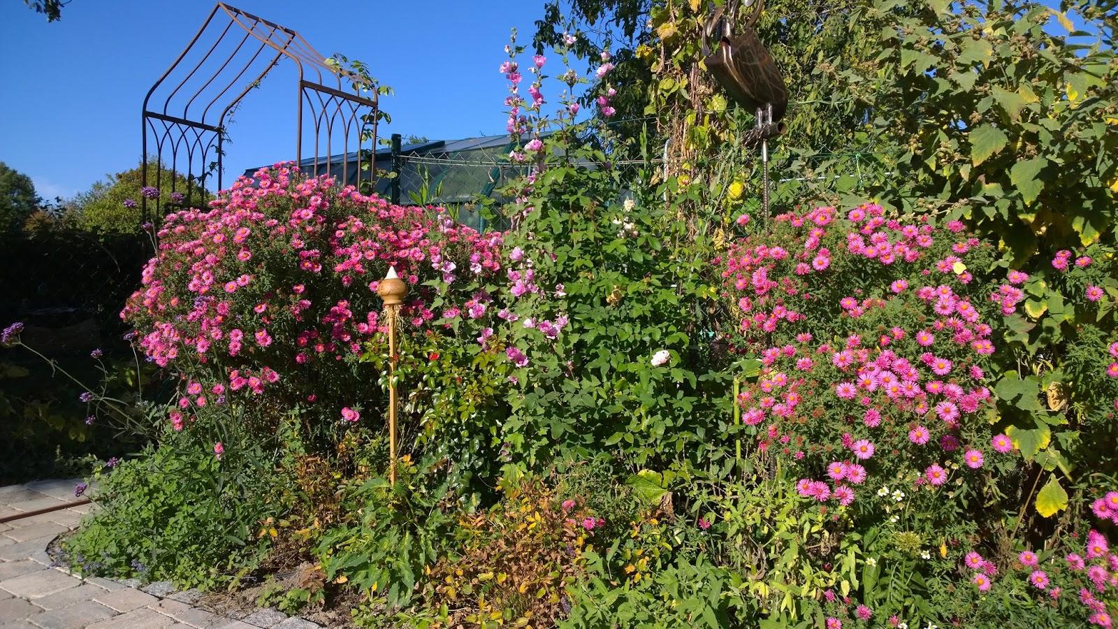 Achimsgarten der selbstversorger und garten blog schillernde farben im herbst garten - Herbst garten ...