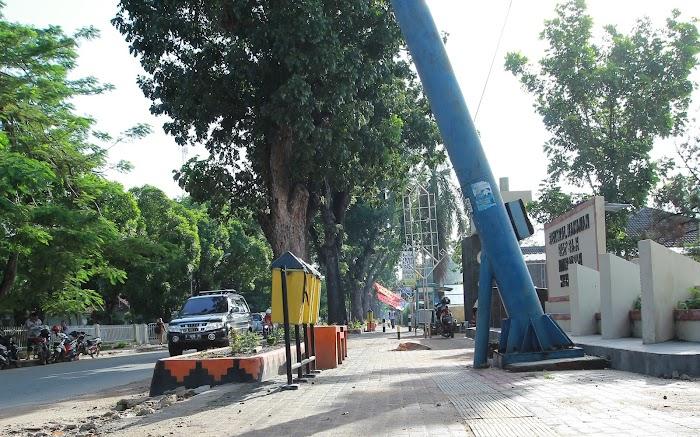Pohon Mahoni Membuat Metro Lebih Spesial dan Indah