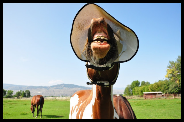 Funny Horses Wallpapers - Entertainment Only