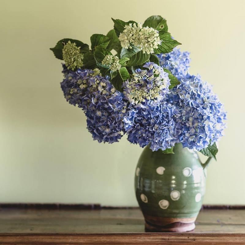 Jarrón con flores azules y blancas de hortensias (Hydrangea)