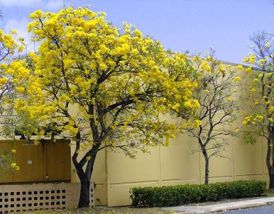 Jasa Tukang Taman Surabaya - Tanaman hias bunga kuning