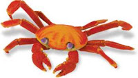 sally lightfoot crab toy miniature
