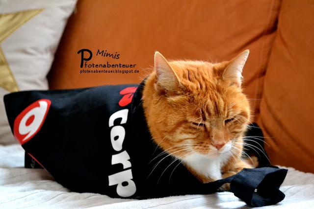 Katze Mimi schläft in ihrer neuen Tasche von corpuls