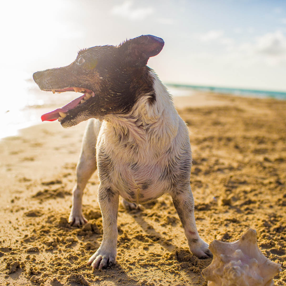 Dog photos by eyeSpice Photography, aboard Sail Beluga, Turks and Caicos Islands. Notes from the Pack, July 2016.