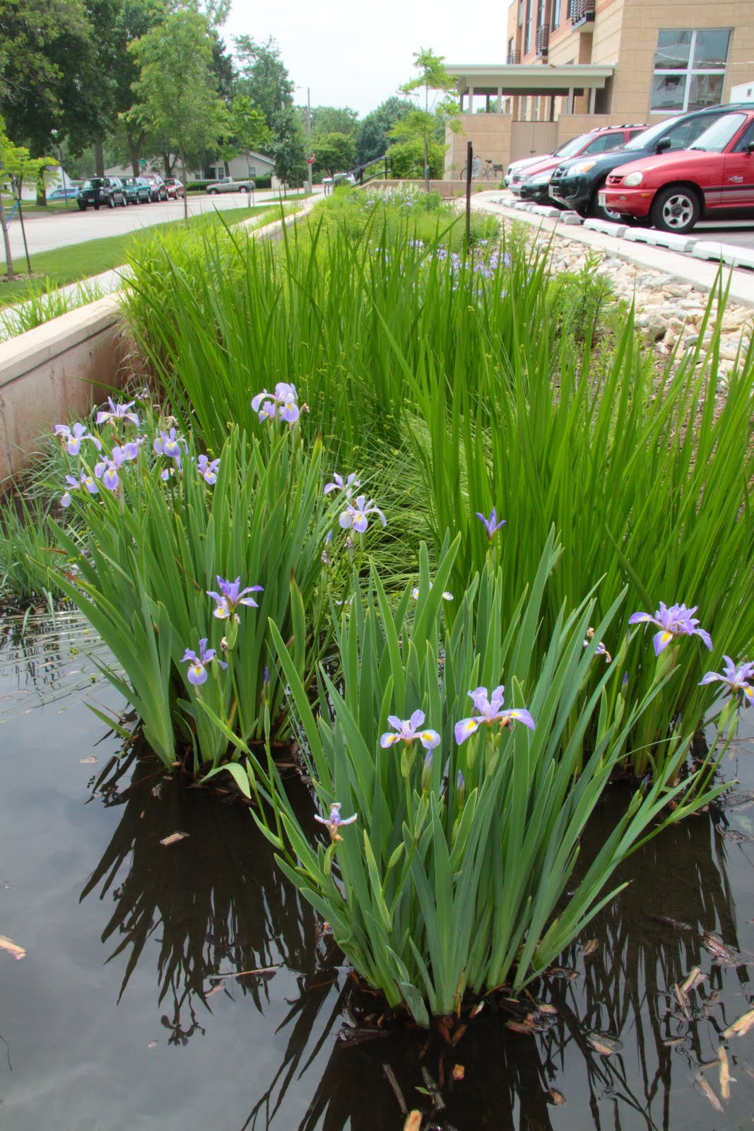 Water Gardens: Rain Gardens In Dane County: December 2011