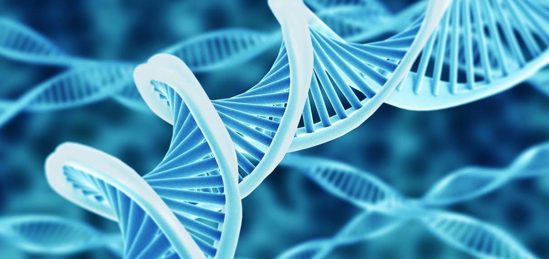 Anche i papà possono trasmettere DNA mitocondriale ai propri figli.
