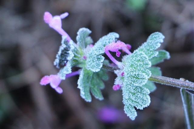 Flor Congelada-Divulgação Falando de Turismo