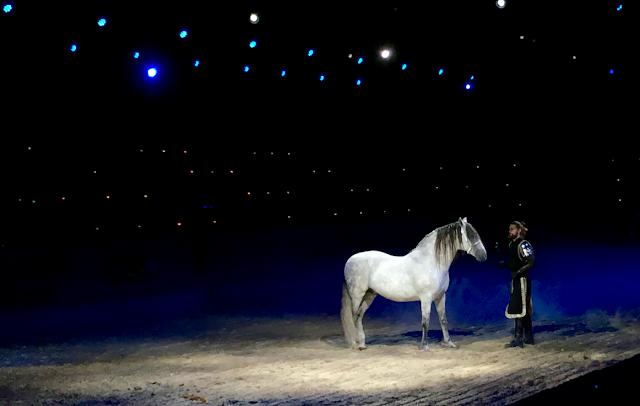 Medieval Times Toronto #MedievalTimesTO #mtfan - horse