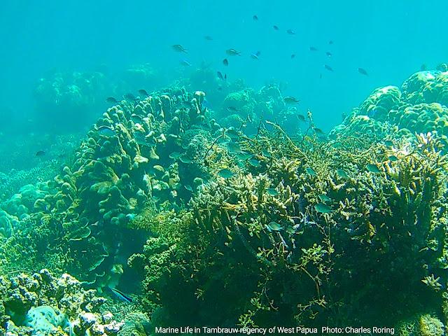 Snorkeling in Tambrauw regency of Indonesia