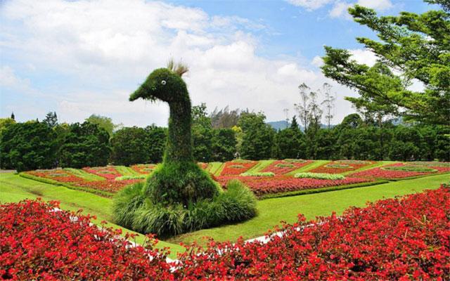 Nusantara Flower Garden