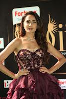 Pragya Jaiswal Sizzles in a Shantanu Nikhil Designed Gown  Exclusive 038.JPG
