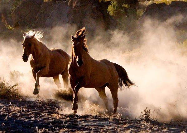 Horse rider wallpaper - photo#48