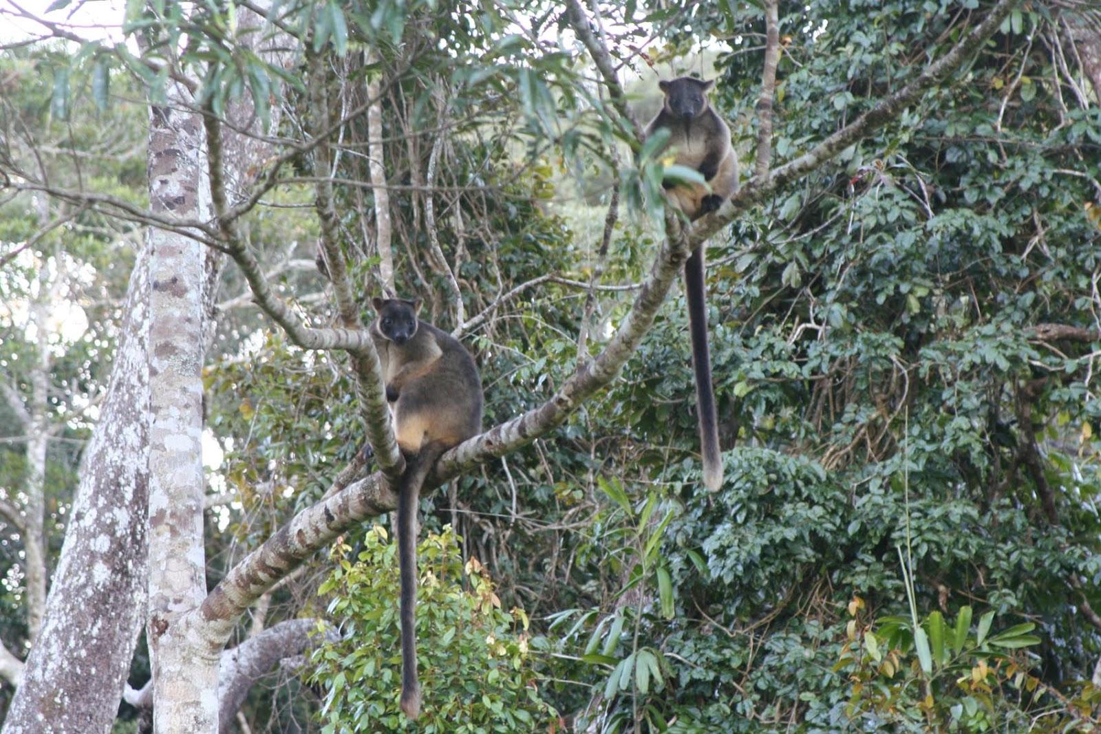 Cute Koala Hd Wallpaper Wildlife Tree Kangaroo Animal Facts And Photos