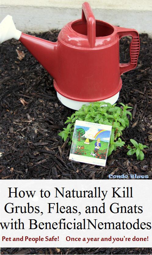 Condo Blues How To Naturally Kill Grubs Fleas And Fungus Gnats