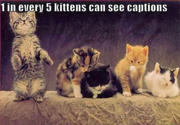 Funny joke picture- 1 in every 5 kittens can see captions
