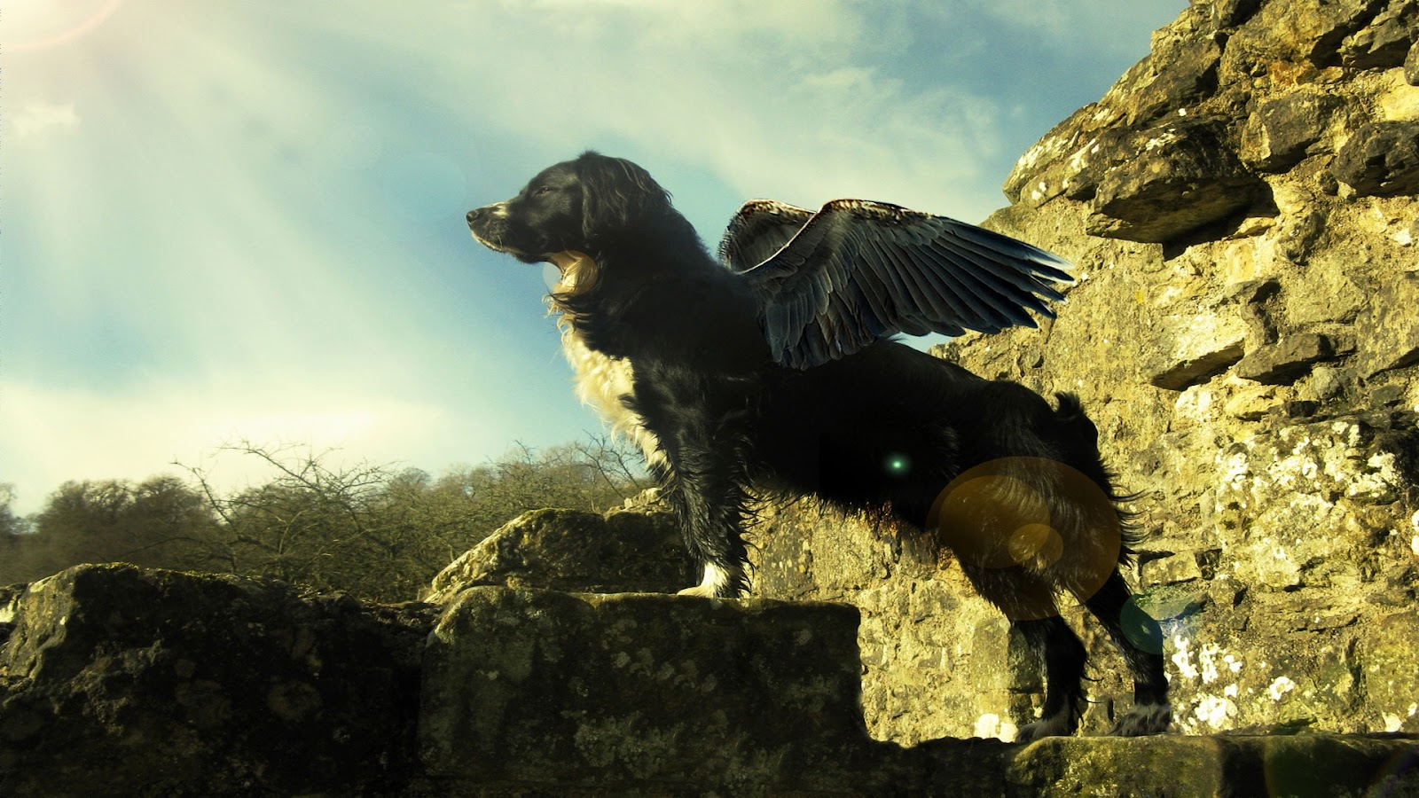 Cool Dog with Wings Design Wallpapers Backgrounds | Dogs Wallpapers Backgrounds