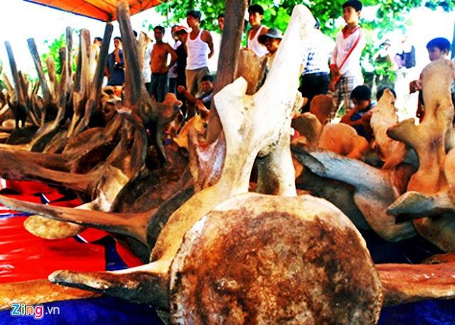 'Bảo tàng' xương cá voi ở Lý Sơn - Hình 5