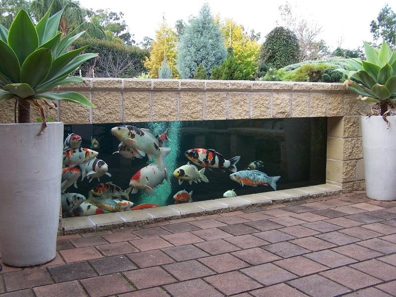 Contoh Gambar Kolam Ikan Minimalis