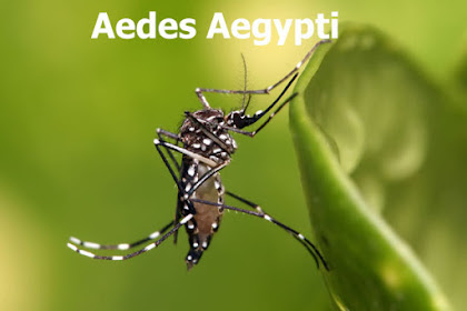 3 Jenis Nyamuk yang Paling Mematikan Manusia, Awas Hati Hati!