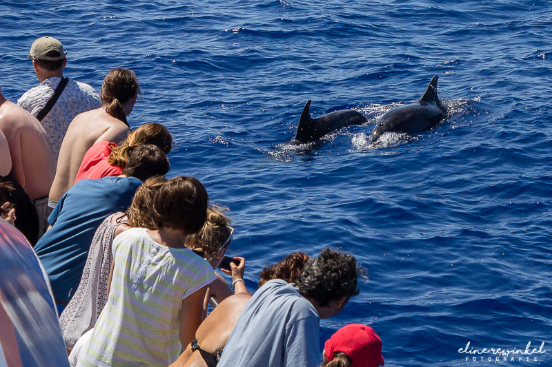 Dolphin cruise Madeira   title=