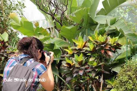 fotografare farfalle