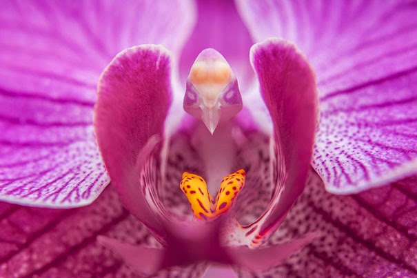 Moth Orchid (Phalaenopsis) - 17 Flowers That Look Like Something Else