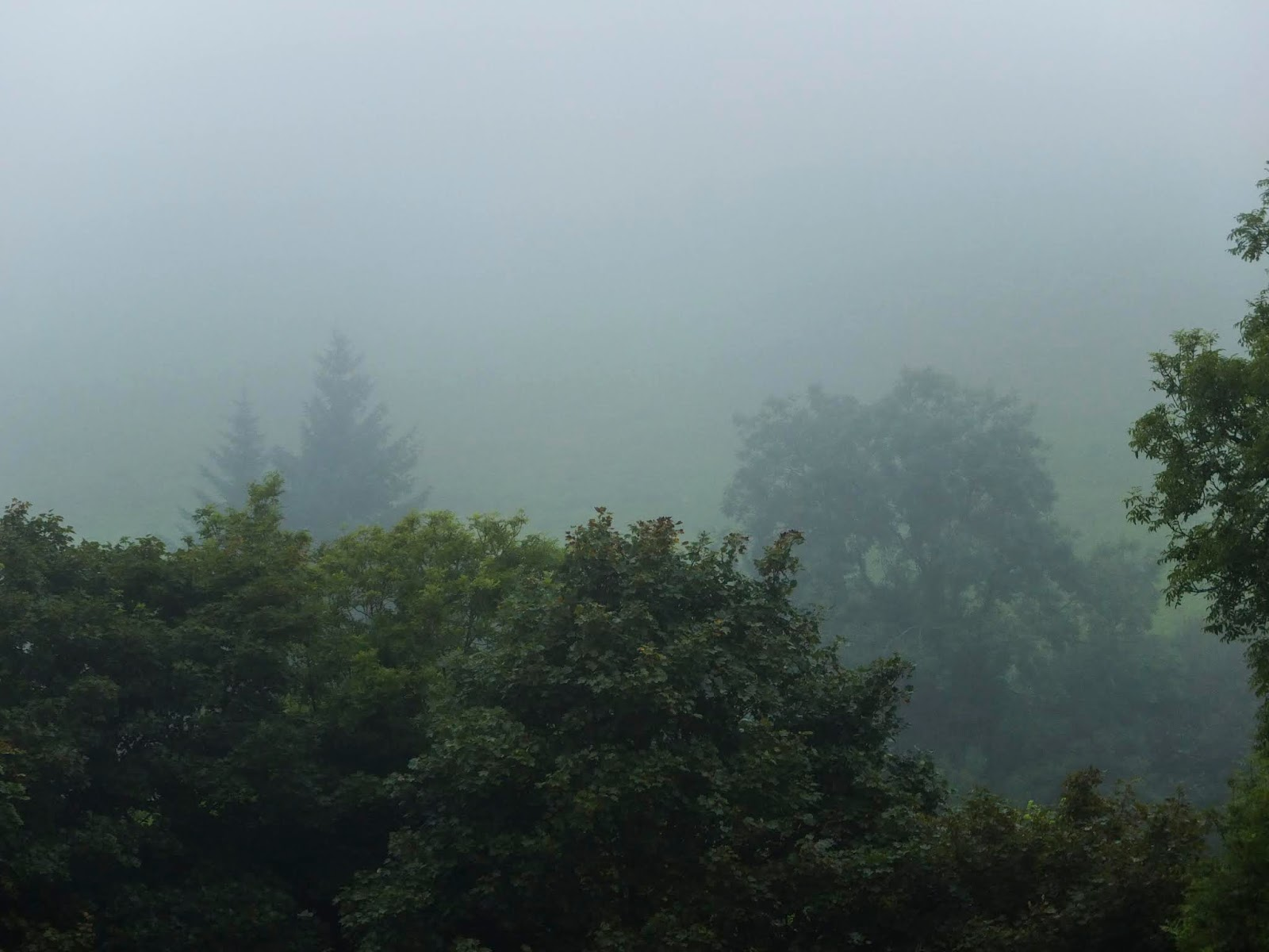 Misty and foggy tree tops in the Boggeragh Mountains, County Cork.