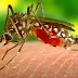 Zika: FlightHub's Travel Facts About The Virus