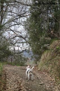 Walk in Tuscan Hills Curious Dog Gregory