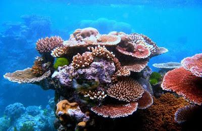 Arrecifes Coral Los Tuxtlas