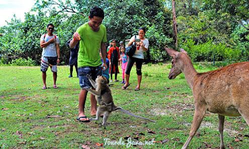 safari satwa di taman wisata alam dan cagar alam pangandaran