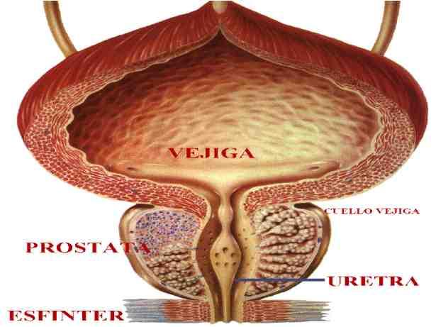 problemas de próstata hombres menores de 40 años