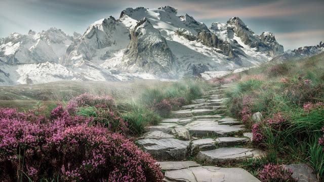 10 Fakta Bunga Lavender Yang Menarik