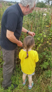 fruit picking with Grandad