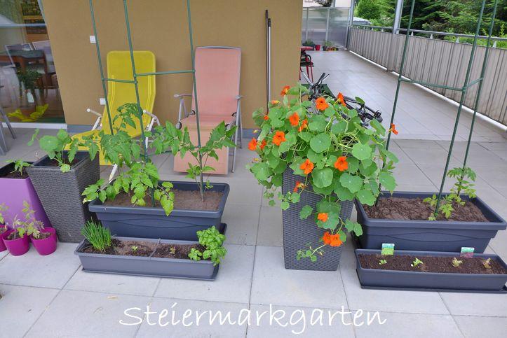 Gemüse-auf-Balkon-Steiermarkgarten