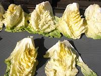 四分割した白菜