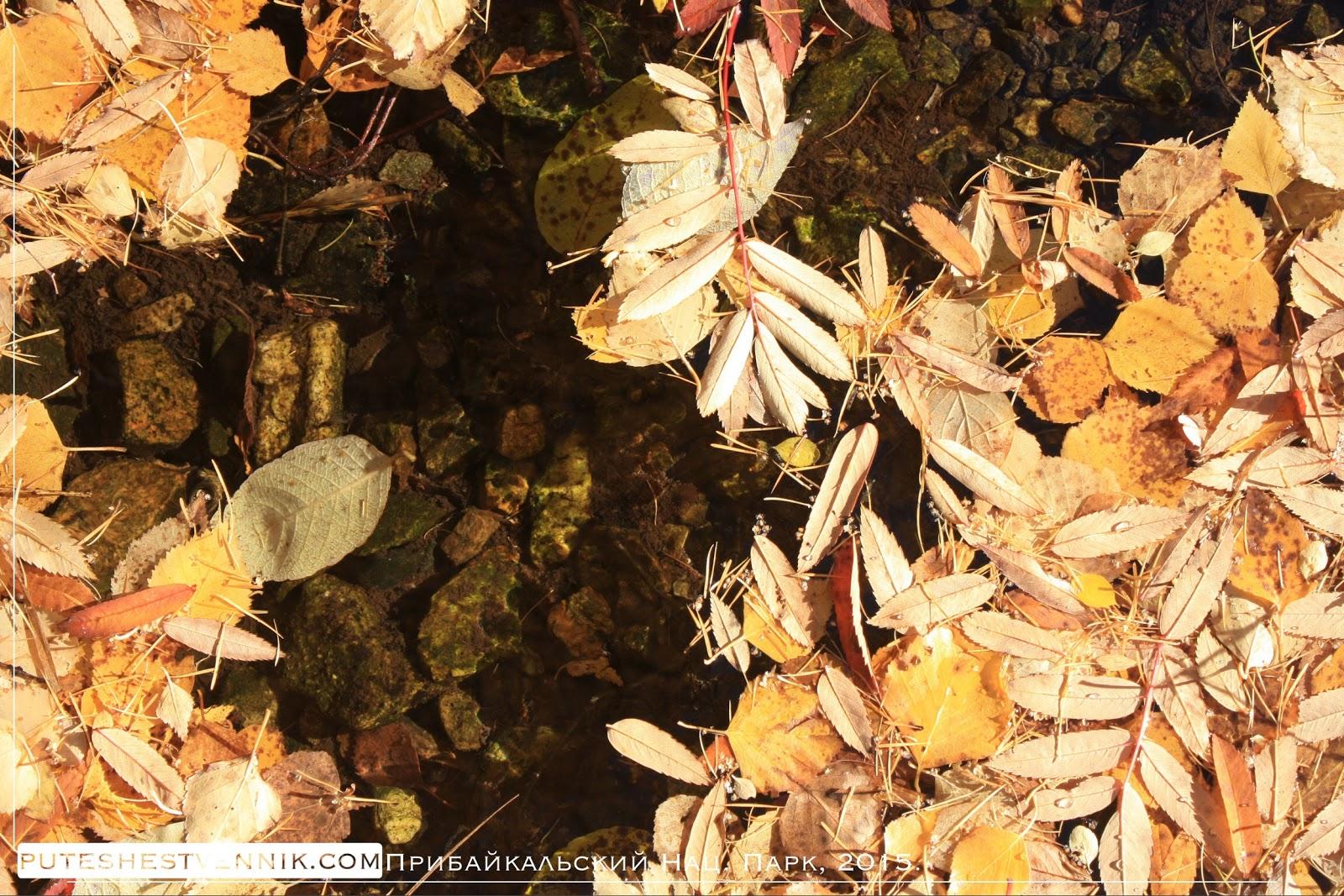 Прозрачный ручей и осенние листья