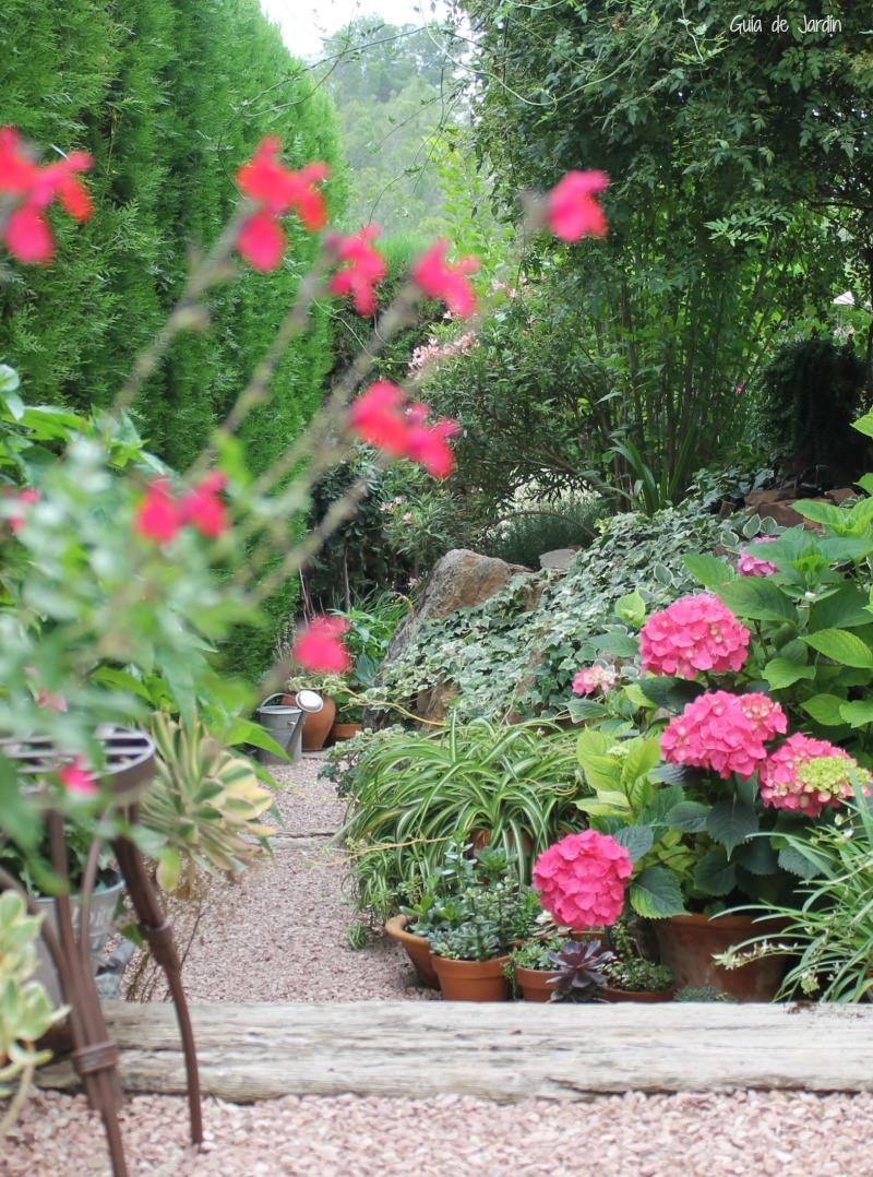 Hortensia en clima seco