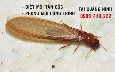 Cửa hàng bán thuốc diệt mối tại Quảng Ninh