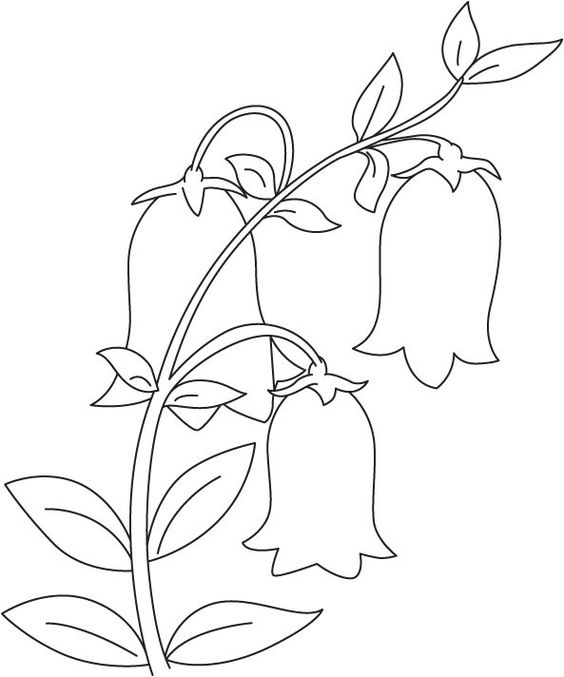 Tranh tô màu bông hoa chuông