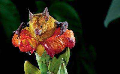 https://bio-orbis.blogspot.com/2014/04/o-chamado-das-flores.html