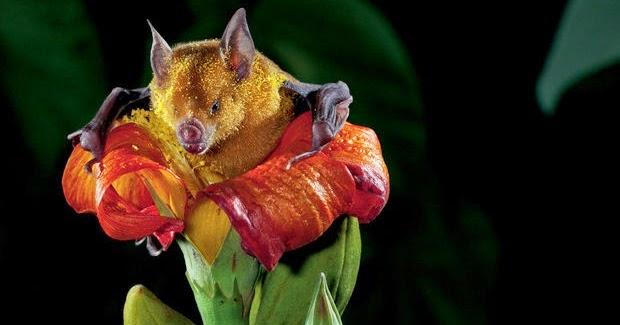 Tem Na Web - O chamado das Flores: Uma incrível interação da Natureza