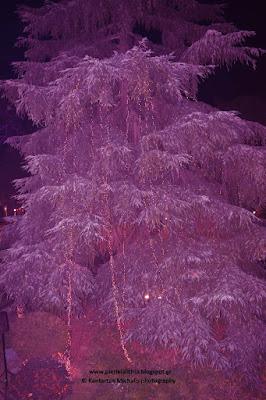 Η Μητρόπολη Κατερίνης φωταγώγησε το Χριστουγεννιάτικο δέντρο της!