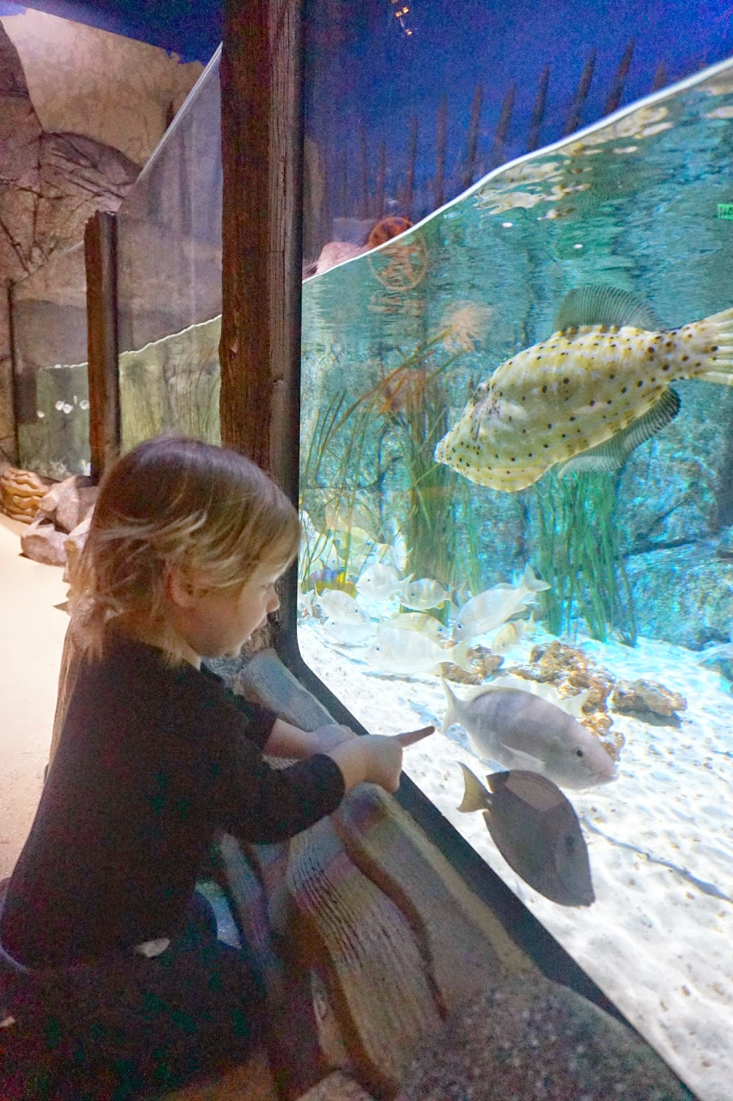 5 places for family fun in charlotte north carolina Concord mills mall aquarium