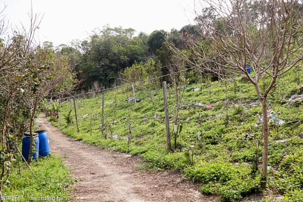 台中大坑武廟育化堂關聖帝君廟,步道沿路賞櫻花和茶花園