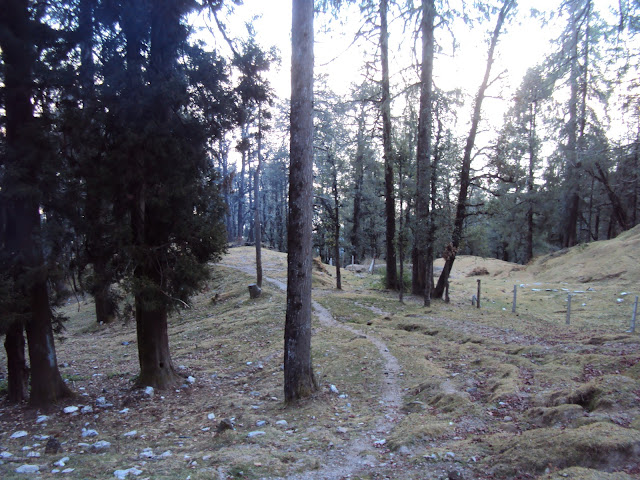 way to forest
