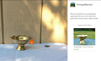 Brass Bowl grasshopper photo bomb